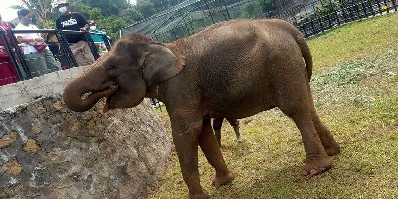 Kebun binatang Lembang Park & Zoo mendapat hibah satwa baru dari Balai Konservasi Sumber Daya Alam (BKSDA) Bali yakni dua ekor gajah Sumatera betina bernama Sindi (30) dan Dela (18).