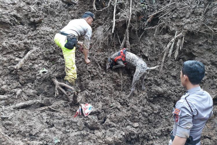 Anjing pelacak unit K9 Polda Sulawesi Selatan tengah mengendus jenazah korban tertimbun longsor di Dusun Pattiro, Desa Pattallikang, Kecamatan Manuju, Kabupaten Gowa, Sulawesi Selatan. Kamis, (24/1/2019).