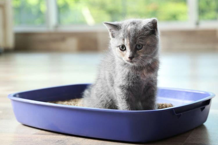 Ilustrasi kotak pasir kucing, anak kucing buang air di kotak pasir.