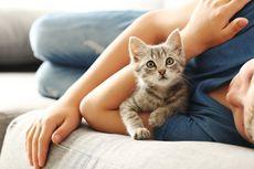 Mengapa Kucing Menyukai Belaian di Kepala? Ini Alasannya