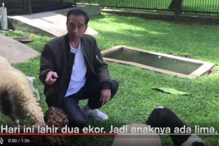 Presiden Joko Widodo kembali membuat vlog, Senin (13/3/2017) dengan menayangkan kelahiran kambing peliharaannya di Istana Bogor.