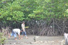 Anto Si Pejuang Sunyi, Memungut Biji Bakau untuk Hijaukan Mangrove