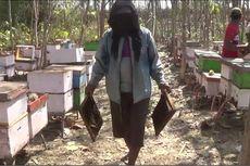 Kisah Peternak Lebah Hasilkan Madu Berkualitas Memanfaatkan Kangkung
