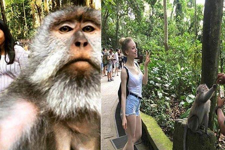 Viral Foto Kera Selfie Dengan Wisatawan Di Ubud Bali Ini