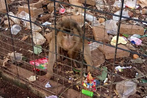 Viral, Kondisi Mini Zoo di Kolam Renang Kostrad Cilodong Memprihatinkan