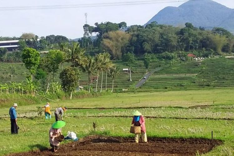 Lahan rawa menjadi fokus Kementan untuk menghadapi siklus El-Nino