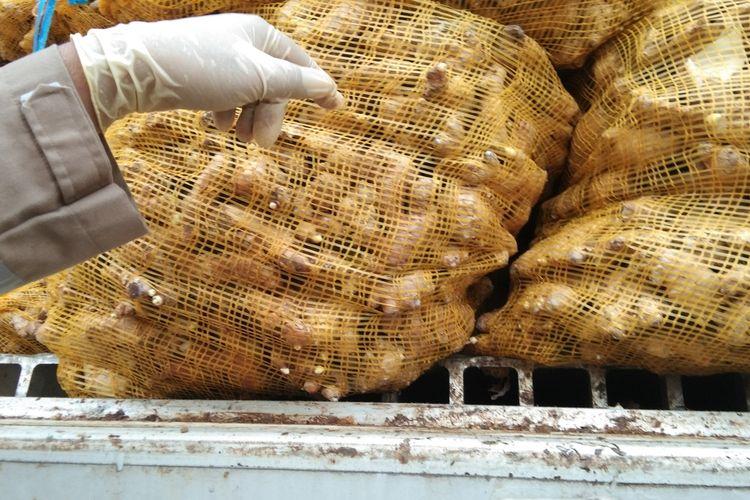Pembukaan segel pada kontainer yang memuat jahe impor tak memenuhi syarat karantina lantaran bertanah. Jahe sebanyak 108 ton dari Mnyanmar dan Vietnam ini dimusnahkan di PT Triguna Pratama Abadi, Karawang, Senin (22/3/2021).