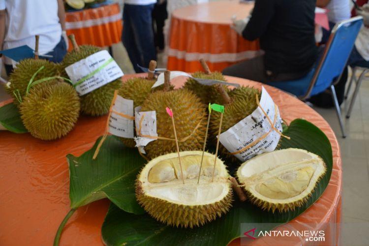Durian asal KKU yang mengikuti kontes dan di lelang dalam Festival Panen Rakyat KKU 2021.