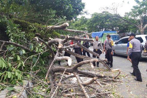 Pohon Tumbang di Bogor, 4 Sepeda Motor Milik Ojol Rusak