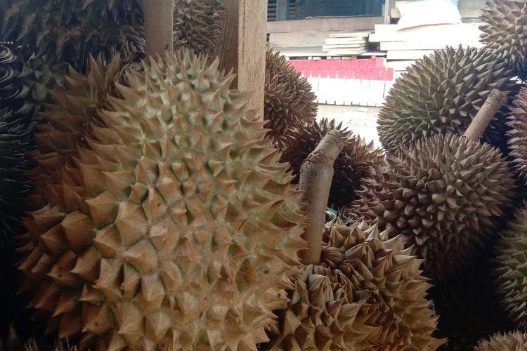 Durian super di Bulukumba, Sulawesi Selatan.