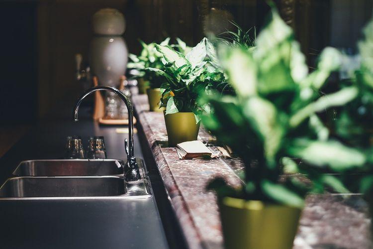 Ilustrasi tanaman hias di dapur.