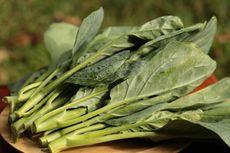 Apa Kailan Sama dengan Kale? Simak Penjelasannya