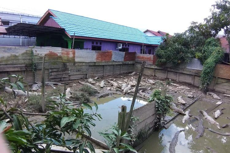 Kandang penangkar 32 ekor buaya berlokasi di belakang rumah pemilik Muhammad Irsani di RT 03 Kelurahan Sambaliung, Kecamatan Sambaliung, Kabupaten Berau, Kalimantan Timur, awal Maret 2020.