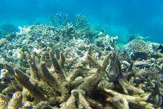 UNESCO Serukan Great Barrier Reef Warisan Dunia
