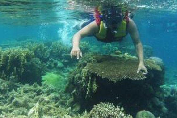 Panorama kedalaman laut dengan aneka kehidupannya di Kepulauan Seribu