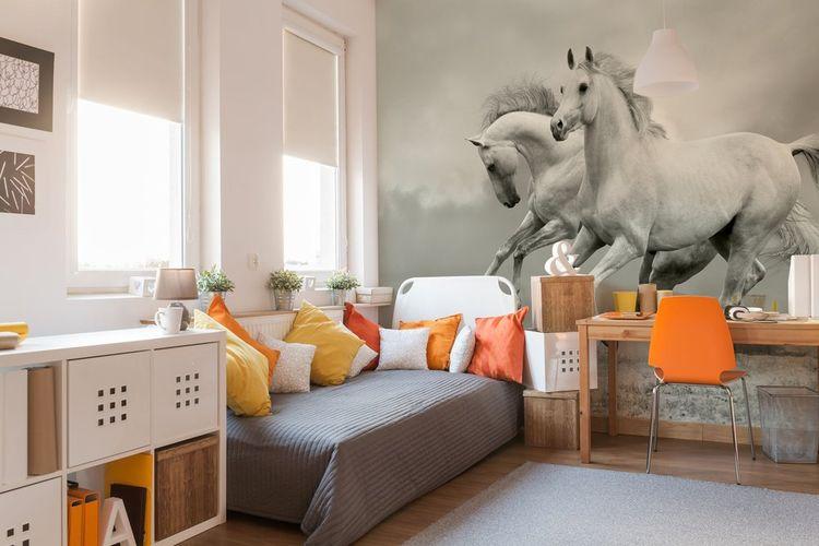 Mural fotografi bertema binatang