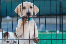 Pria Ini Tepergok Kuliti Anjing untuk Dijual ke Kedai Kebab