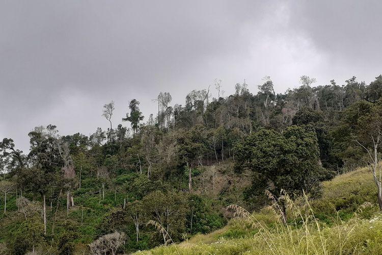 Hutan kawasan Taman Wisata Alam (TWA) Ruteng di Lokas Lok Pahar, Manggarai Timur sudah rusak akibag dirambah warga setempat, Kamis, (4/6/2020). (KOMPAS.com/MARKUS MAKUR)