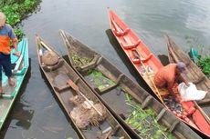 Wader Ijo, Ikan Endemis Rawa Pening Hampir Punah