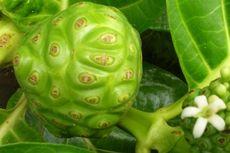7 Tanaman Herbal untuk Meningkatkan Daya Tahan Tubuh