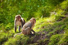 Pasukan Keamanan Taj Mahal Pakai Ketapel untuk Atasi Monyet Nakal