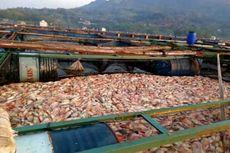 Mati Mendadak, 1,5 Ton Ikan Nila di Waduk Gajah Mungkur Dikubur, Pemilik Rugi Puluhan Juta Rupiah