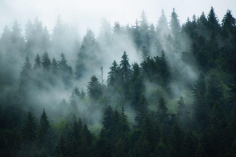 Kabut muncul ketika uap air mengalami proses pencairan atau mengembun. Selama kondensasi, molekul uap air bergabung untuk membuat tetesan air kecil di udara.