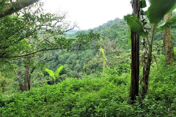 Salah satu bagian di hutan Darién Gap di Panama, Amerika Tengah.