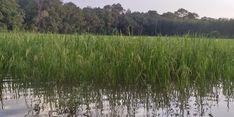 Petani di Bolmong Gagal Panen Akibat Banjir, Kementan Minta Petani Ikut Asuransi untuk Antisipasi