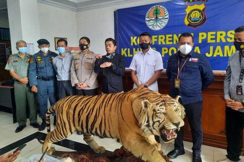 Kulit Harimau dan Gading Gajah Ilegal Dijual Ratusan Juta, Padahal Kerugian Ekologisnya Rp 4,7 M