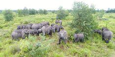 Begini Cara APP Sinar Mas Pertahankan Populasi Gajah Indonesia yang Kritis