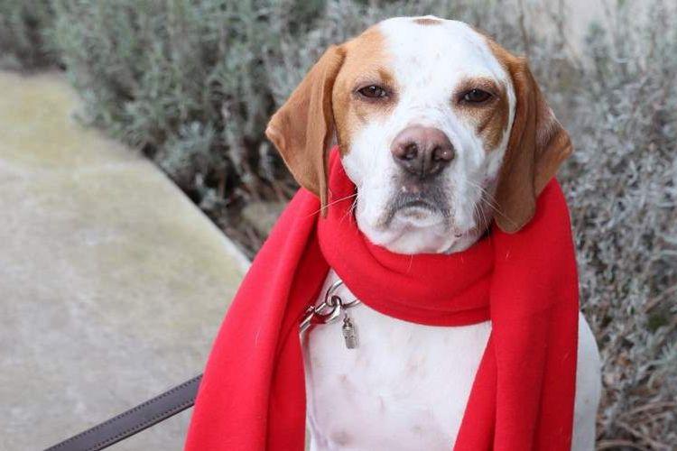 Seekor anjing bernama Lima yang menjadi peserta pemungutan suara Partai Demokratik Sosial (SPD) di Jerman.