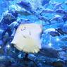 Sea World Bagi-bagi Diskon Tiket Masuk untuk Guru, Ini Syaratnya