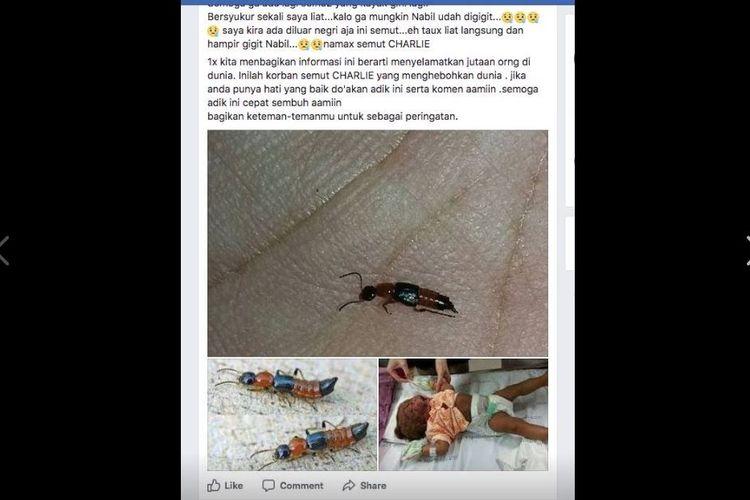 Hoaks semut charlie yang tersebar di Facebook