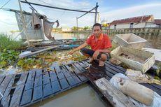 Cerita Nelayan di Sungai Mahakam Terdampak Tumpahan Minyak, Bangun Pagi Lihat Ikan Mati