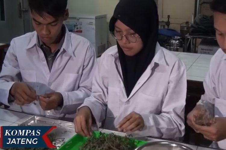 Mahasiswa Universitas Semarang mengolah tanaman krokot menjadi permeh sehat penuh gizi yang diyakini mampu cegah kanker.