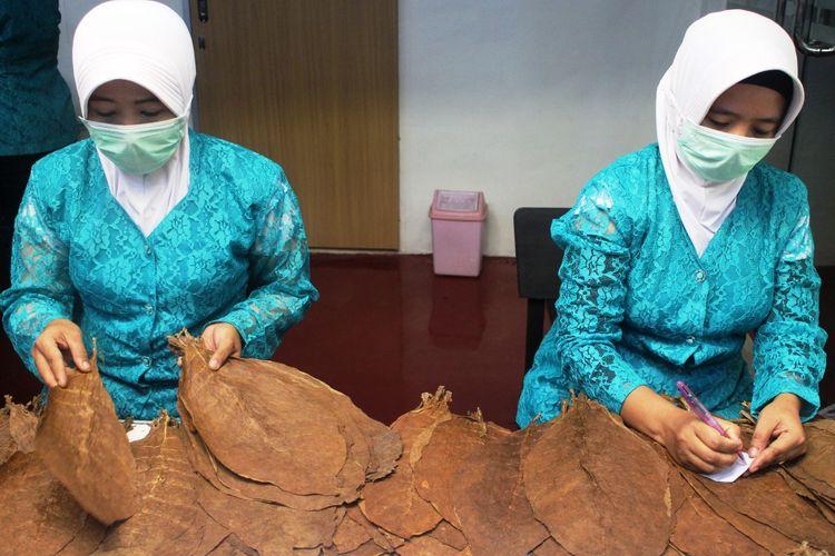 Pekerja saat proses pembuatan cerutu di perusahan BIN CIGAR Jember di Jalan Brawijaya Desa Jubung Kecamatan Sukorambi