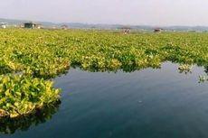 Eceng Gondok Penuhi Hampir 70 Persen Waduk Cirata, Petani Ikan Menjerit