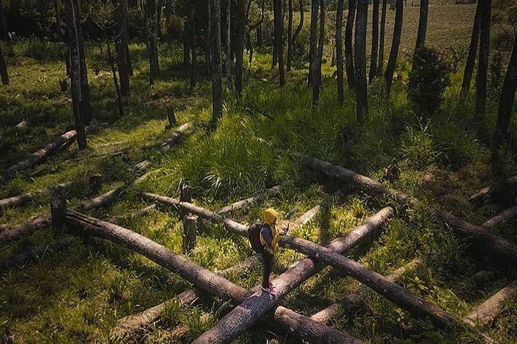 Pengunjung berfoto di Hutan Pinus Rahong