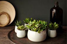 5 Cara Dekorasi Rumah dengan Tanaman Hias