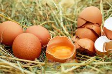 Berkaca dari Kasus Telur Asli Dikira Palsu, Ini Tips Memilih Telur yang Baik...