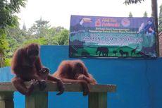 Kebun Binatang di Jateng dan DIY Buka Donasi untuk Pakan Satwa