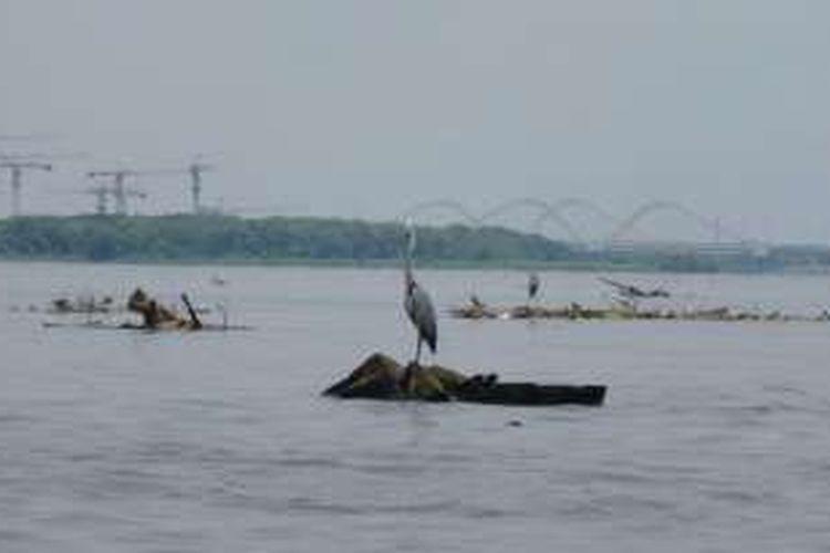 Sampah di Teluk Jakarta, Kali Adem, Penjaringan, Jakarta Utara. Di atas sampah kayu itu berdiri burung bangau.