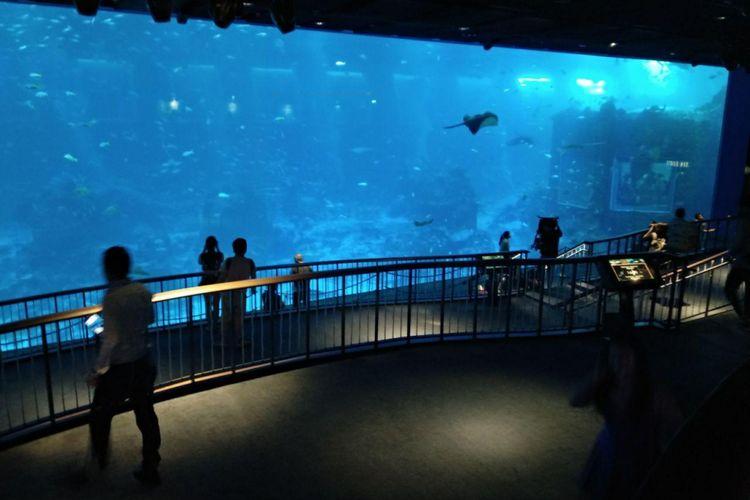 Area open ocean habitat di S.E.A. Aquarium, Singapura