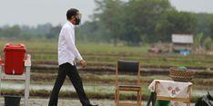 Jokowi: Kawasan Food Estate di Kalteng Akan Digarap Seluas 168.000 Hektar