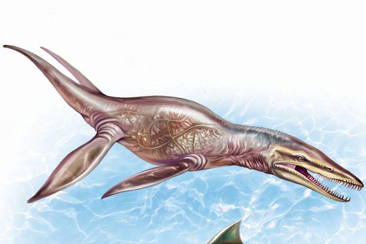 Ilustrasi pliosaurus, dinosaurus reptil yang merupakan predator laut di zaman Jurassic. Reptil ini memiliki gigitan yang lebih kuat dari Tyrannosaurus rex (T.rex). Sisa fosil ditemukan di gurun terkering di dunia, Gurun Atacama, Chili.
