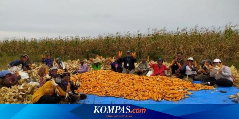 INRU Melalui Program Intercrop, Toba Pulp Lestari Dorong Produktivitas Lahan Petani Binaan