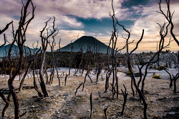Hutan Mati kawasan Gunung Papandayan, Garut, Jawa Barat