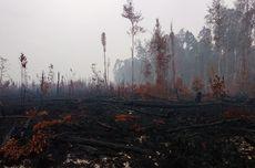 Penyebab Hutan Gundul