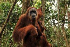 Asita Sumut Protes Kenaikan Tarif Masuk TN Gunung Leuser